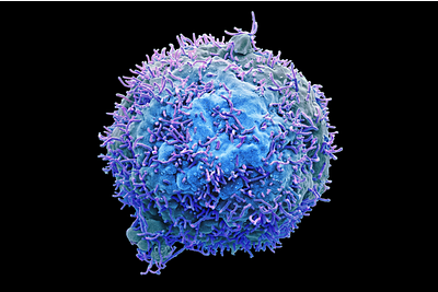 immune cell image for representing cell based assays to aid oncology research.
