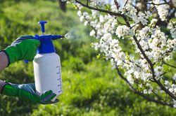 Spraying trees as part of a agrochemical field trials.