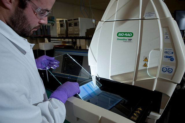 Charles River scientist placing gel in ChemiDoc Imaging System for cell line characterization testing.