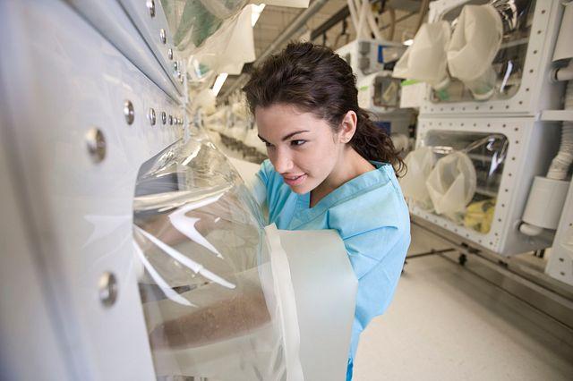 アイソレーターで動物を扱う動物研究技術者