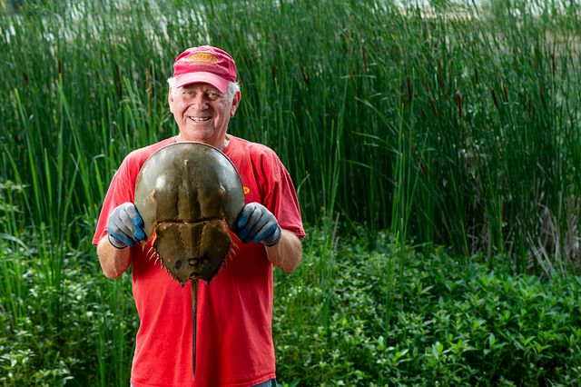 man holding horseshoe crab on a south carolina shore