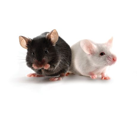black mouse and white mouse sitting next to each other