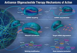 Graphic of Antisense Oligonucleotide Therapies Mechanism of Action, which are being applied to Rare Diseases. This form of gene therapy target RNA sequencing, enzymatic pathways and splicing mechanism to impact gene mutations.