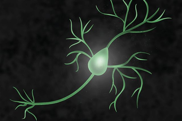 An Image of a pyramidal neuron which is the type of neuron in the forebrain implicated in most psychiatric disorders.