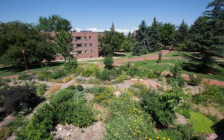 Garden on DU campus