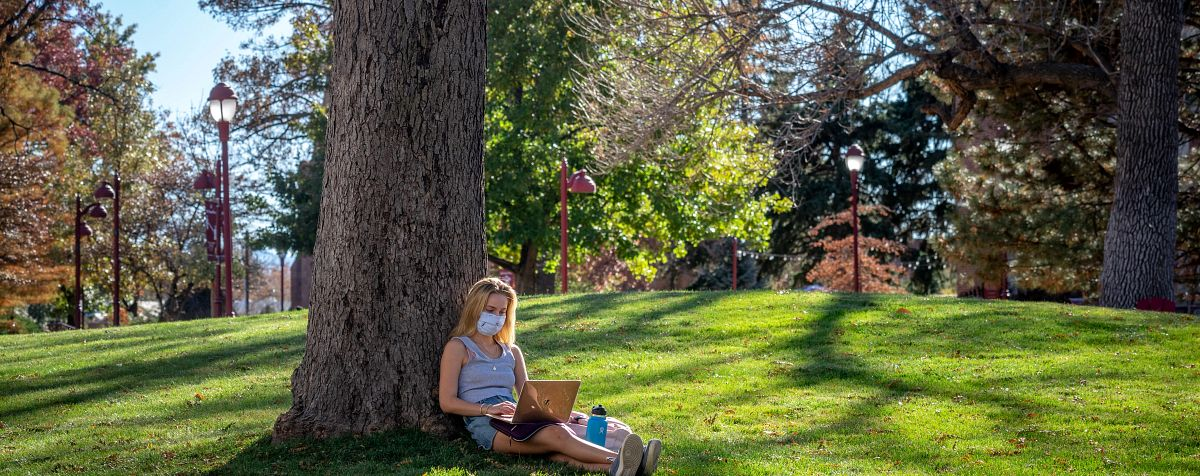 student sitting under a tree using laptop