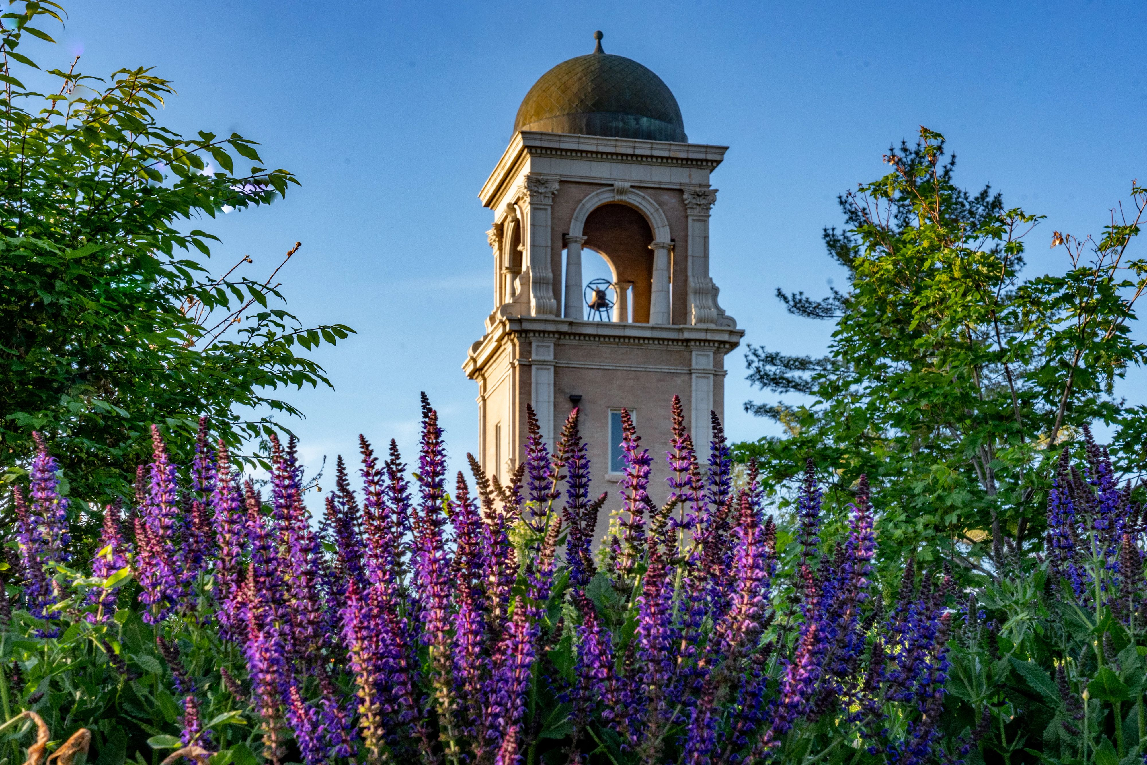campus photo in spring with bell tower and purple flowers