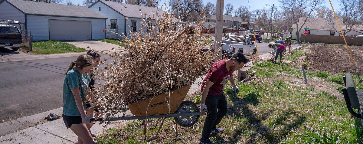 students carrying wheelbarrow full of weeds
