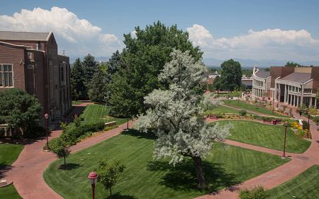trees on DU campus