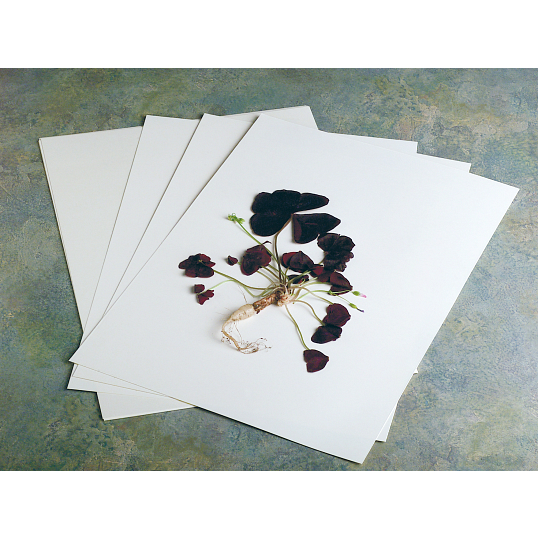 NYBG Style Herbarium Paper (100 Sheets)