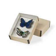 Gaylord Archival® Specimen Mounting Box