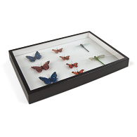 Specimen Mounting Box