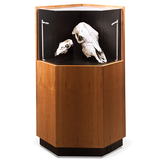 Gaylord Archival® Delphi™ Hyperion Exhibit Case with Lighting