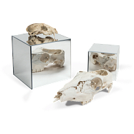 Jule-Art Mirrored Acrylic Display Cube
