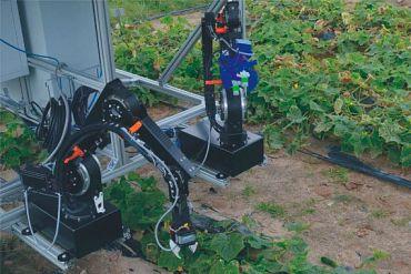 Gurkenernte mit Roboter