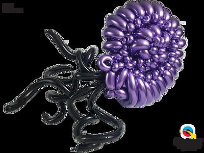 Bex_Cohen_Ammonite