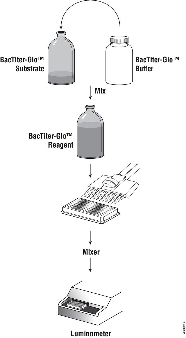 Overview of the BacTiter-Glo™ Microbial Cell Viability Assay protocol.