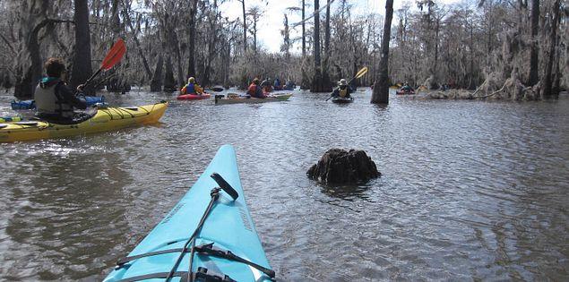 Cypress trees in South Carolina's Sparkleberry Swamp