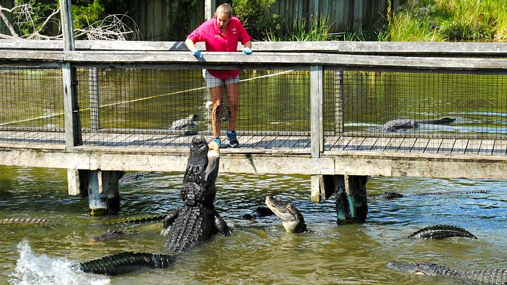 Feeding reptiles at Alligator Adventure in North Myrtle Beach