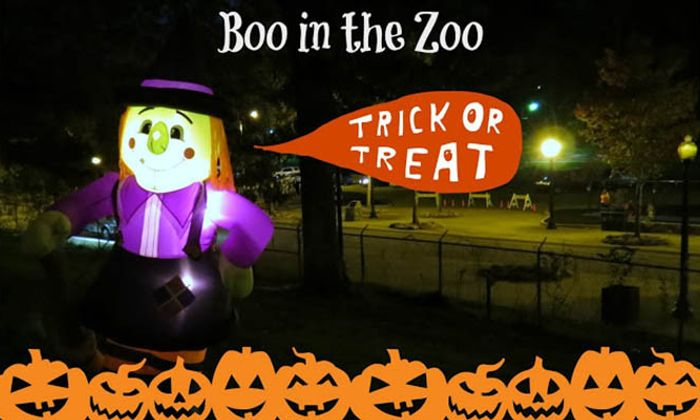 Boo in the Zoo