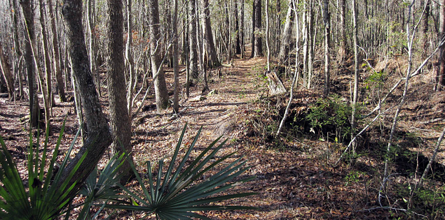 Trail through Francis Marion National Forest in South Carolina