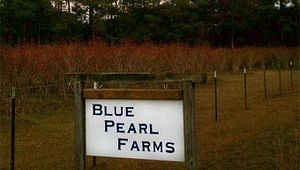 Blue Pearl Farms