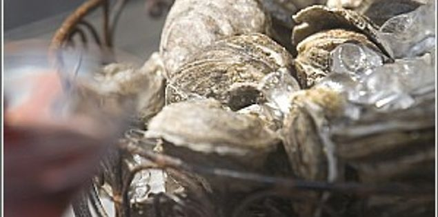 Roasted South Carolina oysters in the winter