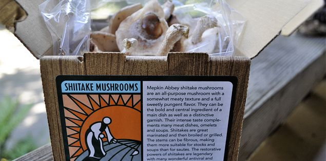 Mepkin Abbey Mushrooms