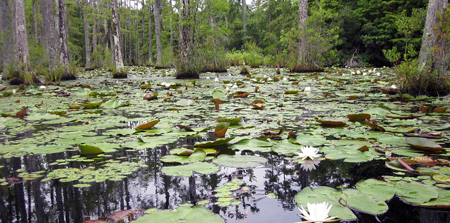 Cypress Gardens in Moncks Corner, South Carolina
