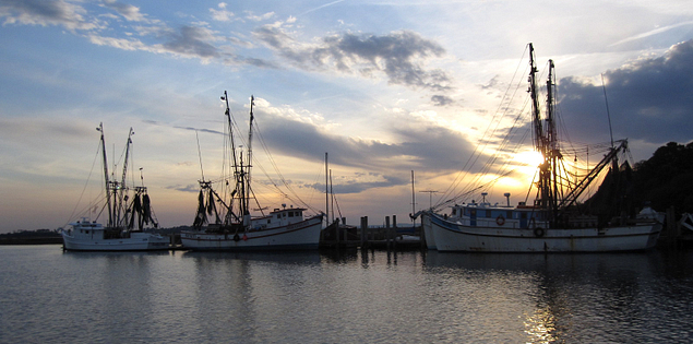 Shrimp boats in Charleston