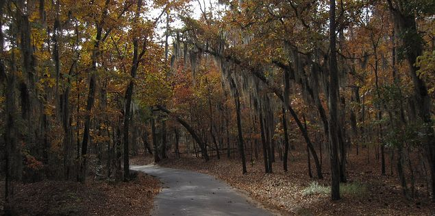Trail through Poinsett State Park