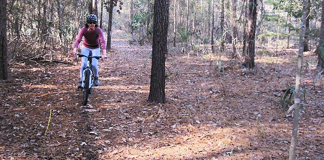 Explore the forests and wildlife of the Lowcountry
