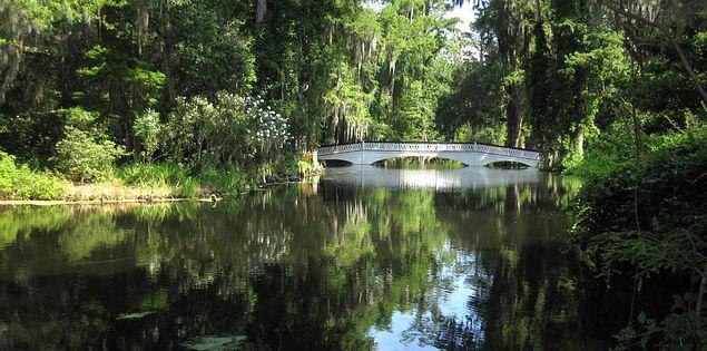 Footbridge in Magnolia Plantation in Charleston, South Carolina