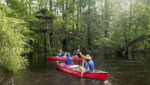 Edisto River Treehouse Adventure