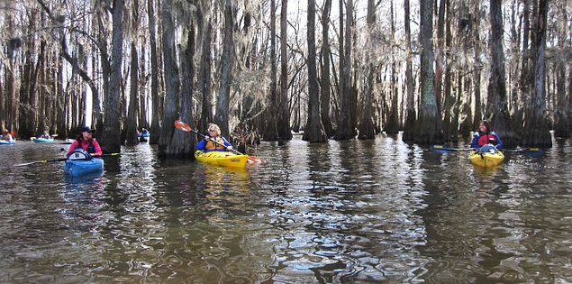 Sparkleberry Swamp in the Santee region of South Carolina