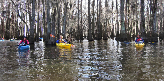 Sparkleberry Swamp in the Santee region of South Carolina
