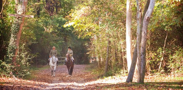 Horseback riding aiken