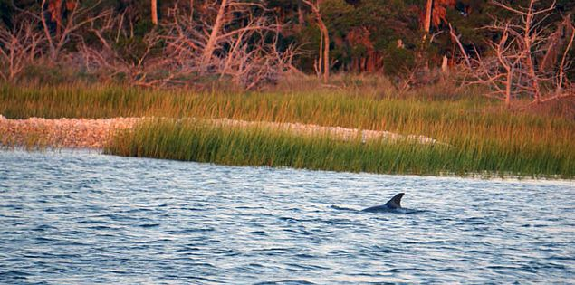 Barrier Island Eco Tours