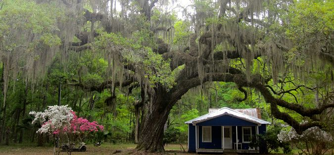 Discover history and heritage on Daufuskie Island, SC.