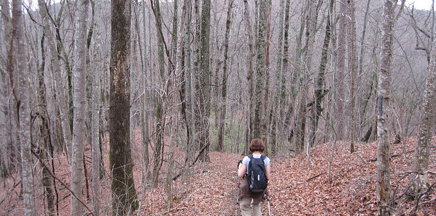 Hardwood forest on the Tamassee Knob Trail