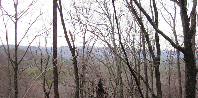 Forests in the Blue Ridge Escarpment of Tamassee Knob in South Carolina