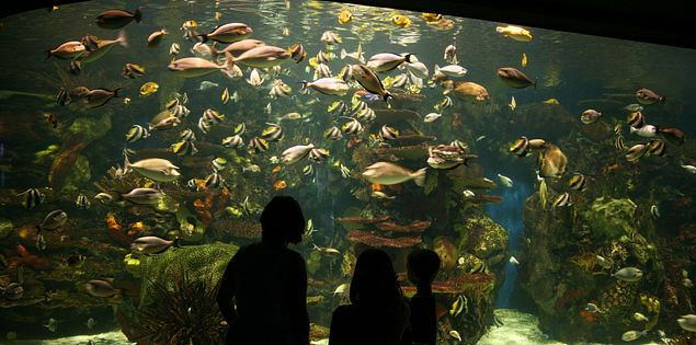 Ripley's Aquarium in Myrtle Beach, SC.
