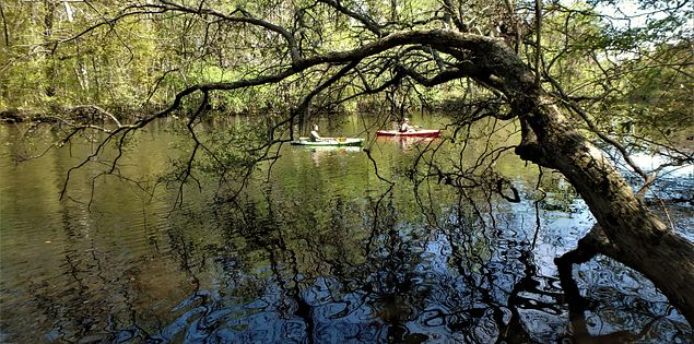 edisto blackwater river kayak