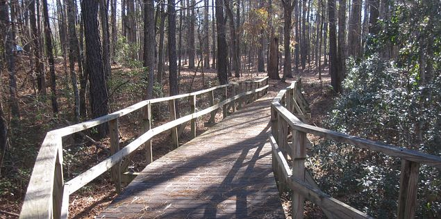 Barnwell State Park boardwalk