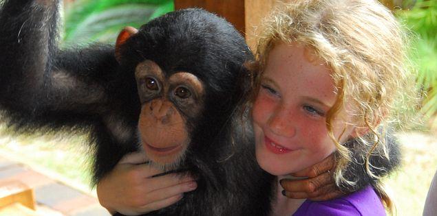 A chimp says hello at Myrtle Beach Safari.