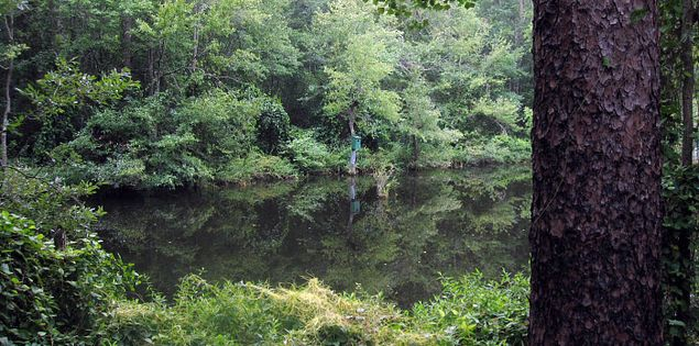 Pond by the Cathedral Aisle Trail in Aiken, South Carolina
