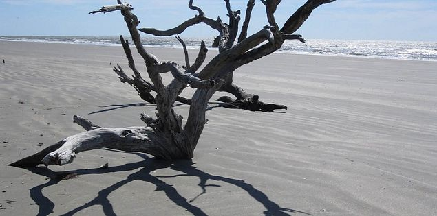 South Carolina's Boneyard Beach