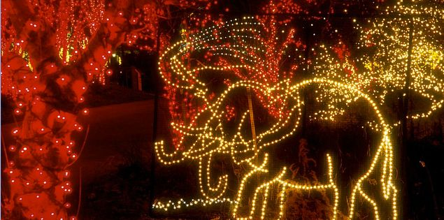 Riverbanks Zoo Light Show in Columbia, South Carolina