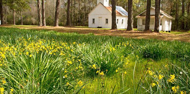 Hobcaw Barony in South Carolina