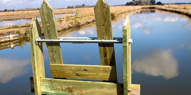 Views of the South Carolina Lowcountry's ACE Basic